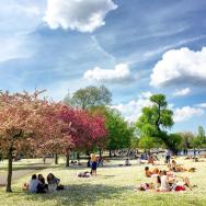 春天的攝政公園草地長滿了雛菊!